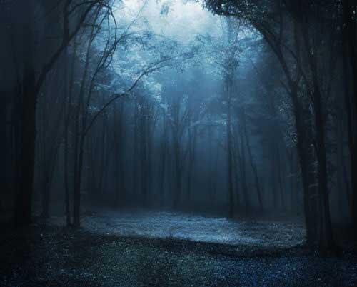moonforest.jpg